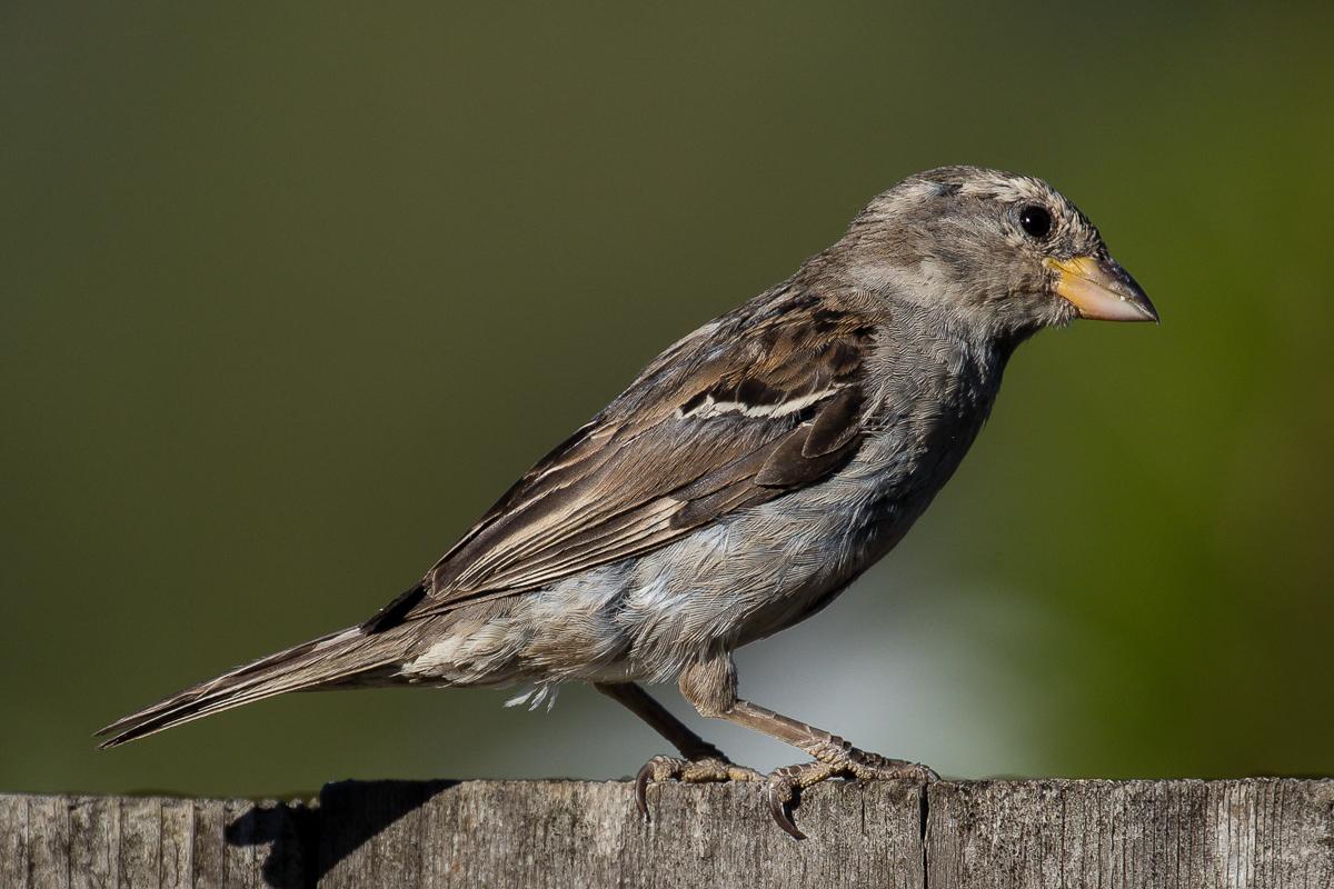 IMAGE: http://www.lj3.com/1dx2/bird.jpg