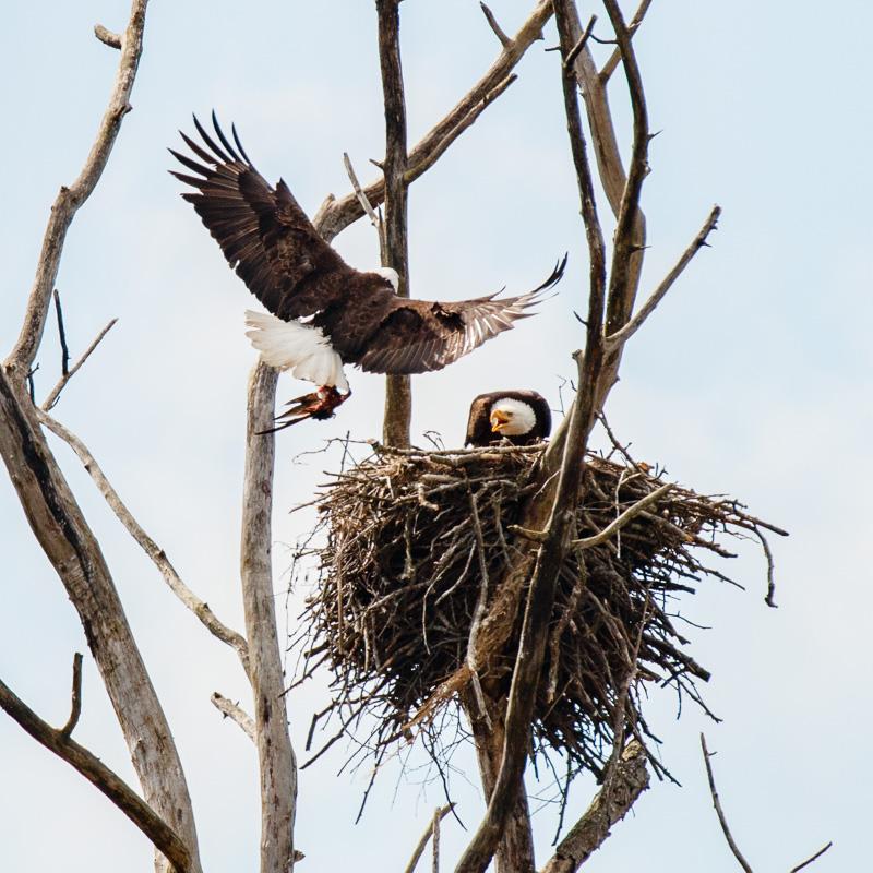 IMAGE: http://www.lj3.com/1dx2/eagle_5.jpg