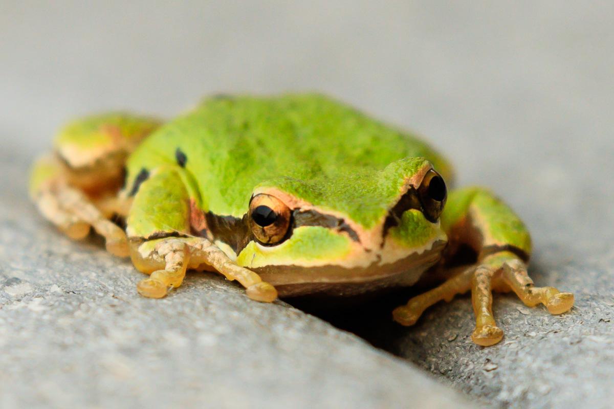 IMAGE: http://www.lj3.com/1dx2/frog.jpg