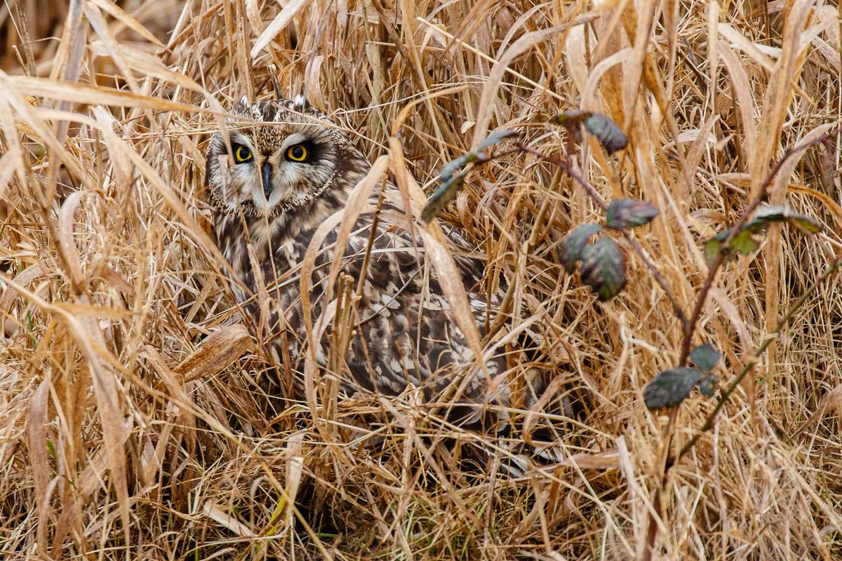 IMAGE: http://www.lj3.com/1dx2/owl_3.jpg