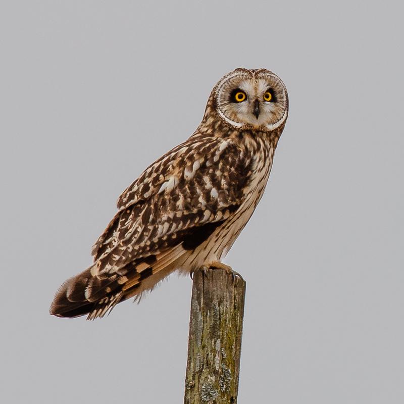 IMAGE: http://www.lj3.com/1dx2/owl_5.jpg
