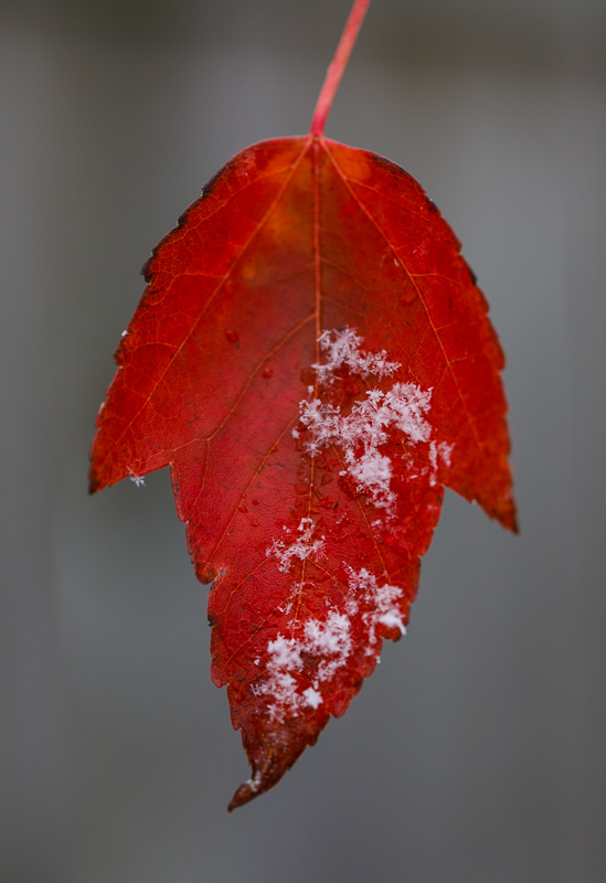 IMAGE: http://www.lj3.com/5d4/snow_1.jpg