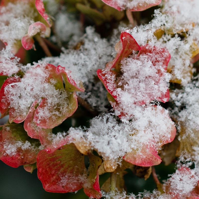 IMAGE: http://www.lj3.com/5d4/snow_3.jpg