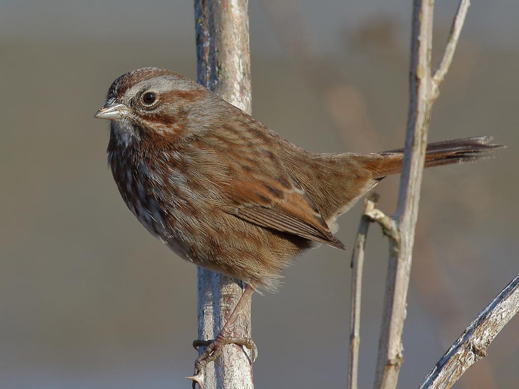 IMAGE: http://www.lj3.com/misc/bird_1.jpg