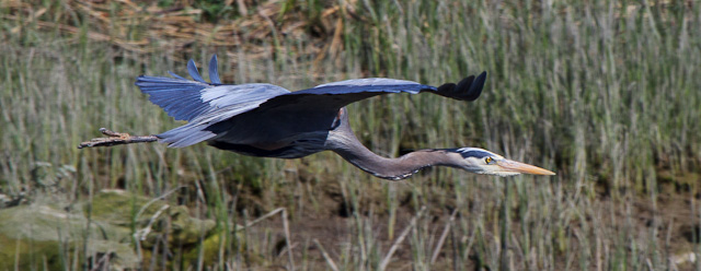 IMAGE: http://www.lj3.com/misc/crop2.jpg