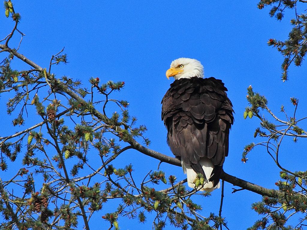 IMAGE: http://www.lj3.com/misc/eagle1.jpg