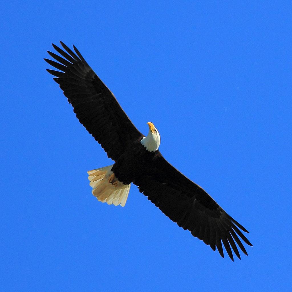 IMAGE: http://www.lj3.com/misc/eagle2.jpg