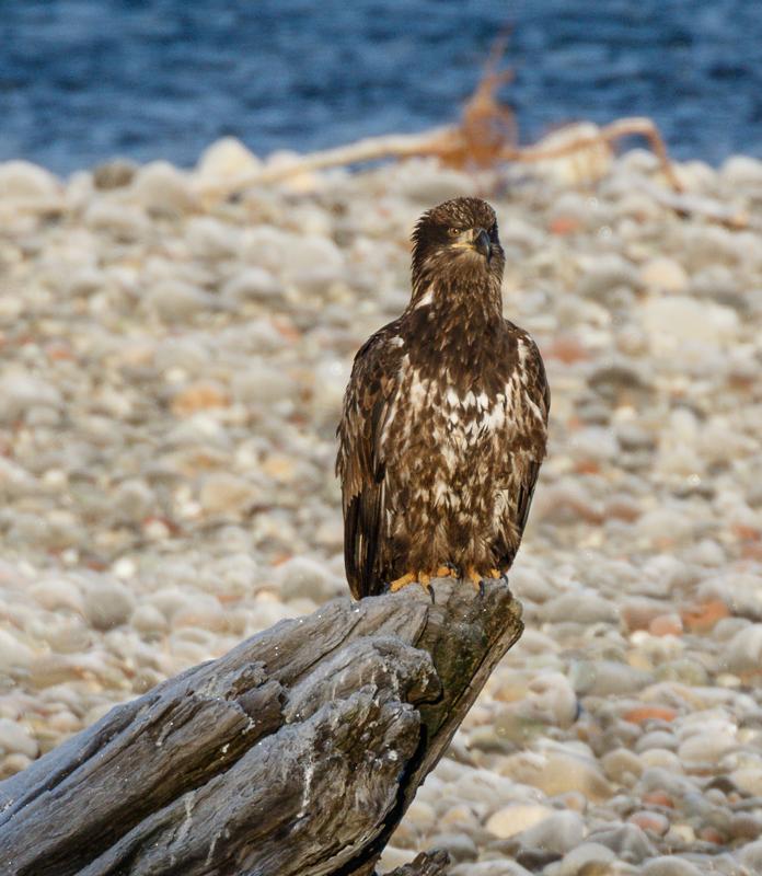 IMAGE: http://www.lj3.com/misc/eagle_100_400.jpg