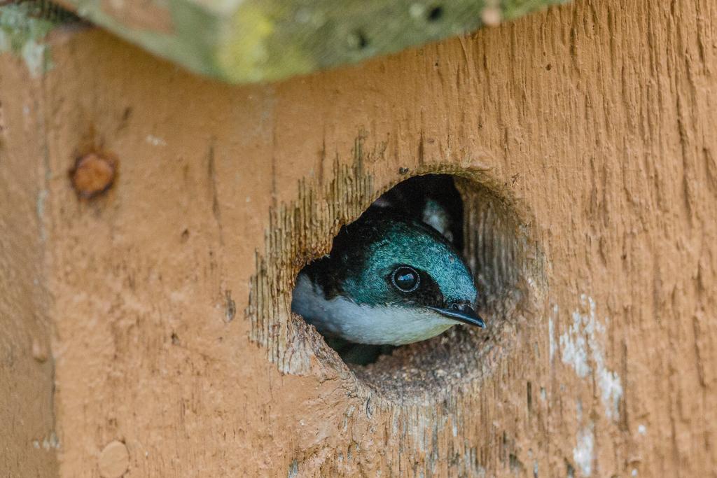 IMAGE: http://www.lj3.com/misc/peek-a-boo.jpg